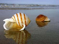 马尔代夫贝壳