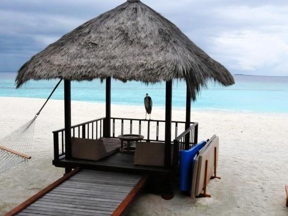 春季蜜月岛――马尔代夫