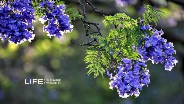 在那蓝花楹盛开的地方:阿根廷旅游攻略