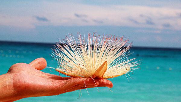 斯米兰岛――人间天堂的享受