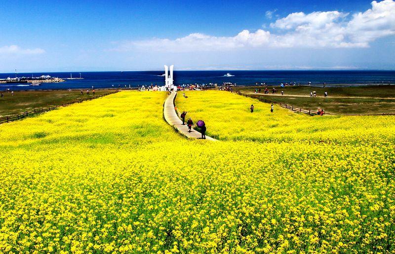 这是大自然的现实,而不是梦幻――青海湖