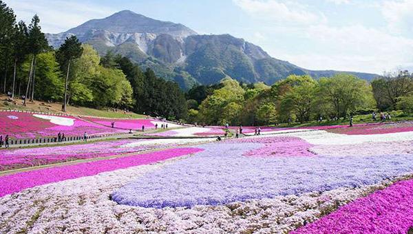 日本赏花攻略、日本赏花最好的地方在哪里