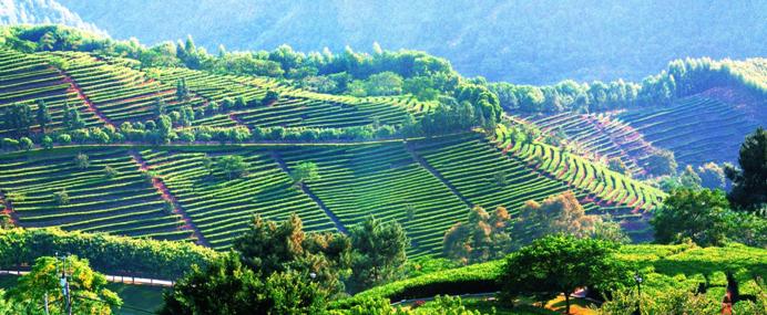 国庆前夕山东发布10条乡村旅游线路