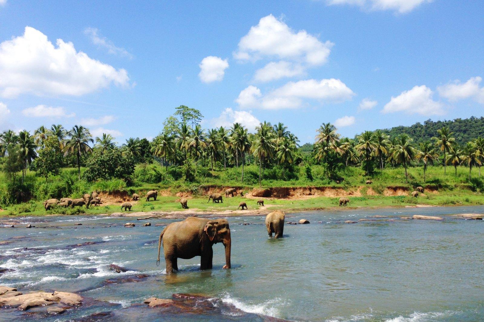 中国使馆提醒莫持旅游签证赴斯里兰卡工作