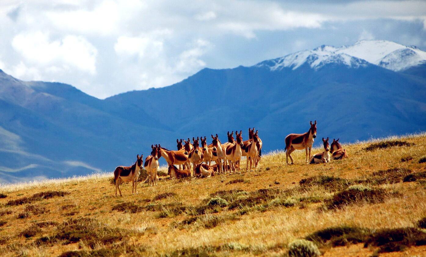 我国面积最大自然保护区群启动联合巡护 查处非法穿越