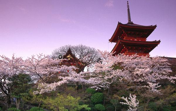 日本本州赏樱花7日游