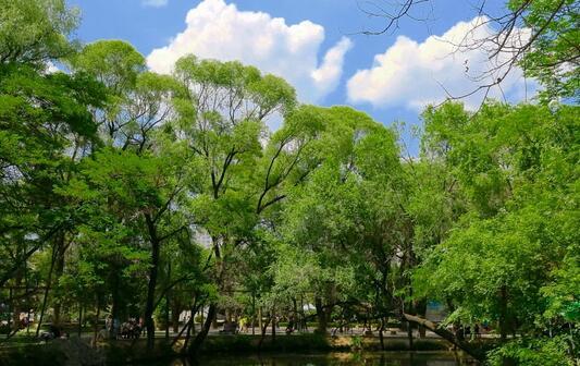 会宁会师塔/野荷谷/崆峒山/柳湖公园汽车两日游