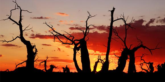 额济纳旗胡杨林-黑城-怪树林-巴丹吉林沙漠-居延海-张掖丹霞-嘉峪关六威廉希尔手机客户端